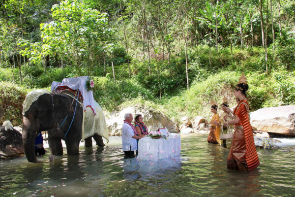 Elephant Wedding @ National Park